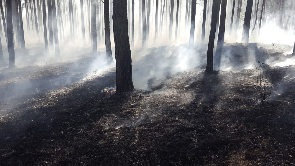 Pożar lasu w Zbrudzewie - 07.05.18 r.