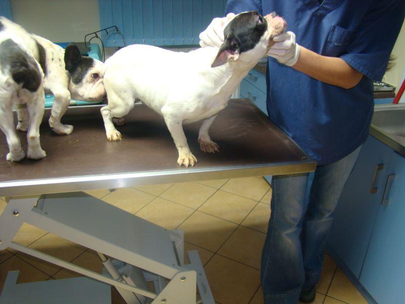 Zlikwidowana hodowla psów w Drzonku